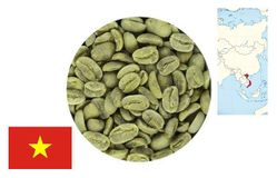 Кофе зеленый нежареный Arabica Vietnam (Long Don) Dalat, Gr 1 scr 16 washed
